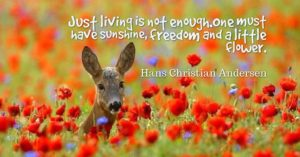 Just living is not enough. One must have sunshine, freedom and a little flower. – Hans Christian Andersen