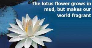 The lotus flower grows in mud, but makes our world fragrant