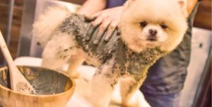 Dogs can have a multitude of skin allergies and sensitivities, and the chemicals in some treatments and shampoos can actually end up making them worse. The best way to treat your dog's skin trouble is with a natural, homemade remedy so you know and control all the ingredients. One type of bath that can soothe many an itch and irritation is a mud bath.