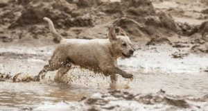 Try giving your furry friend a mud bath today. Rhassoul mud for dogs are available at our on our online store